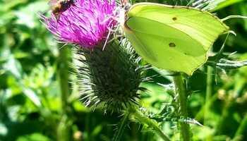 Jesnická fauna a flora