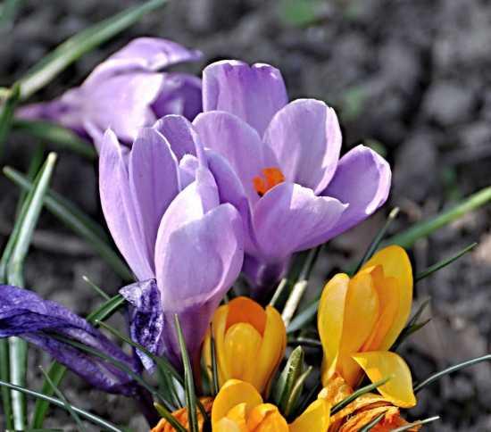 Jarní krása se rodí v přírodě…